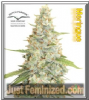 Dutch Passion Meringue Fem 10 Seeds